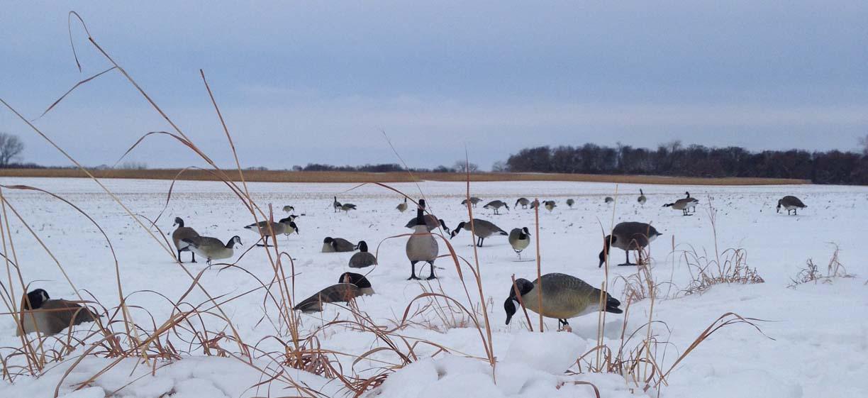 How Many Canada Goose Decoys Do I Need Canada Goose Mens
